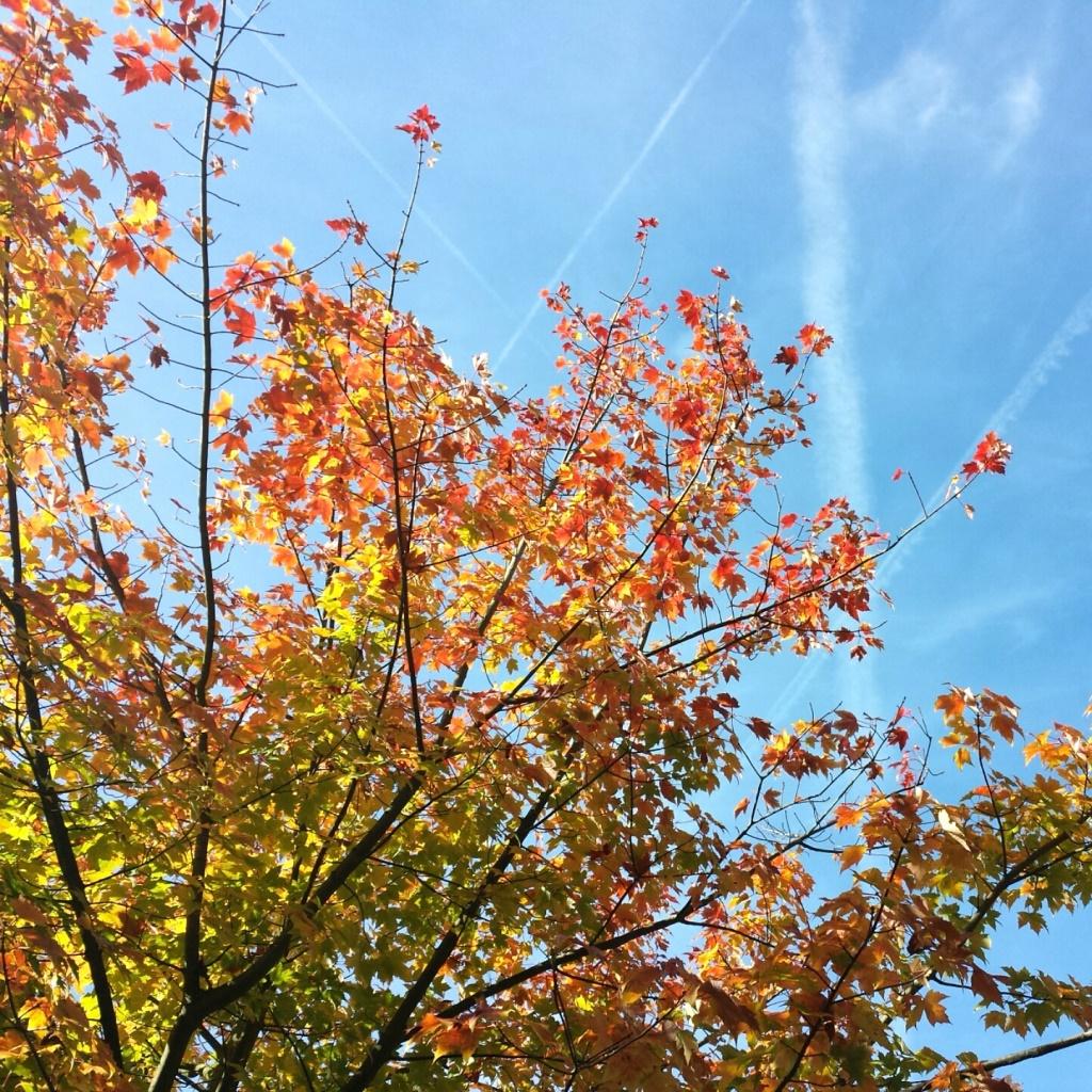 Lichtpuntje 2010 Inspiratie Zo mooi is de herfst