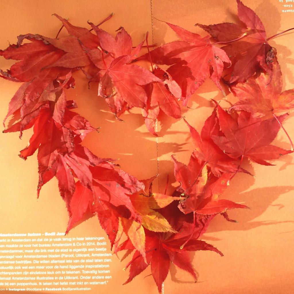 Lichtpuntje 210 Zo mooi is de herfst