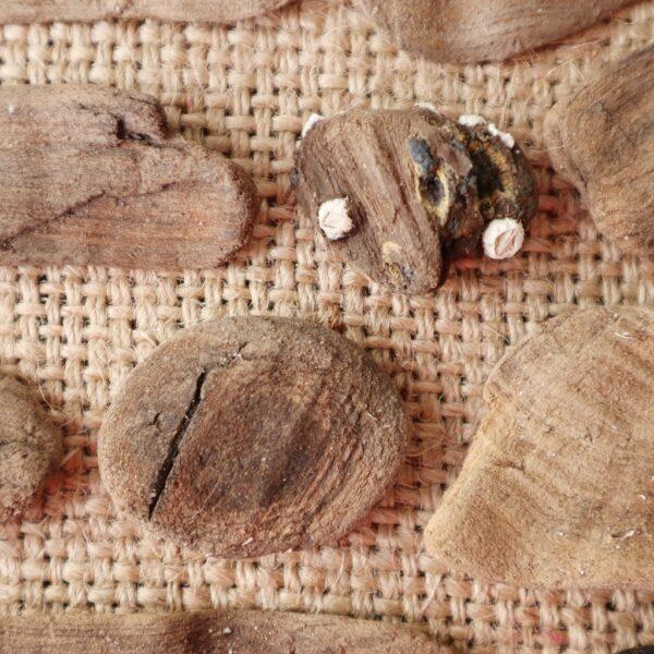 Drijfhout kunstwerk Zee van geluk - Detail - Marloes van Zoelen